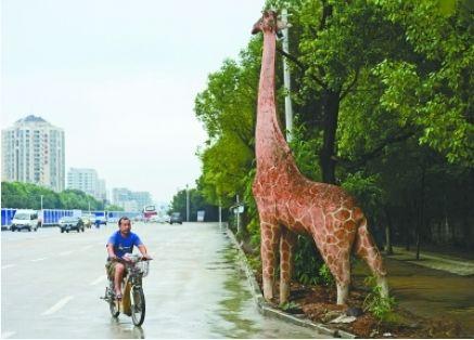 路边的长颈鹿