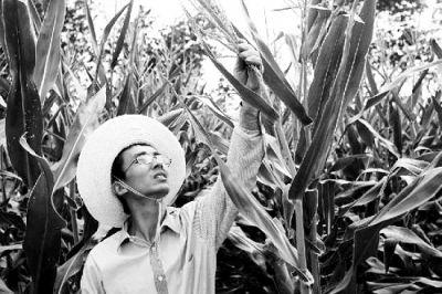 图为玉米地里的邹世佰。