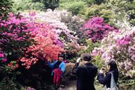 武汉植物园桃园游