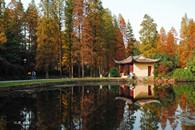 武汉植物园秋季之美
