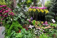 武汉植物园热带兰花展