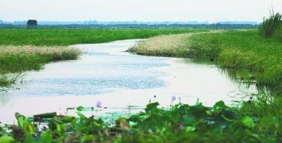 图为枯竹海湿地中心地区。记者何晓刚 实习生范博文 摄