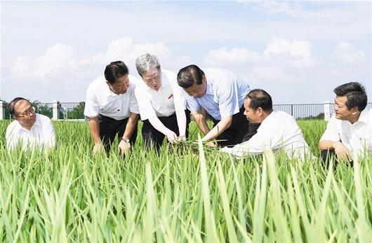 图为:22日下午,习近平冒着酷暑来到鄂州市水稻育种基地考察(新华社发)