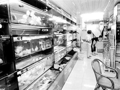 图为:小店里的鱼让人赏心悦目