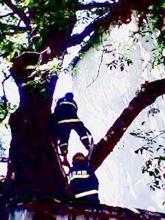消防战士上树灭火。通讯员供图
