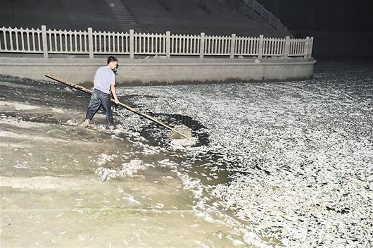 图为:东西湖区白马径泵站附近工作人员在打捞死鱼