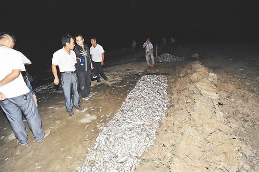 图为:东西湖区村干连夜掩埋死鱼