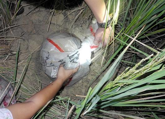 图为:警方从稻田起获毒品