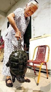 宝丰县林业局野生动物部门判断此龟大约500岁。