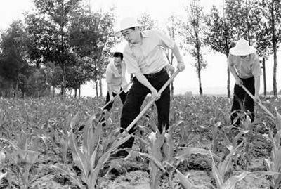 6月18日,山西省委书记袁纯清在武乡县砖壁村李生祥的玉米地帮助锄草松土。任灵杰摄