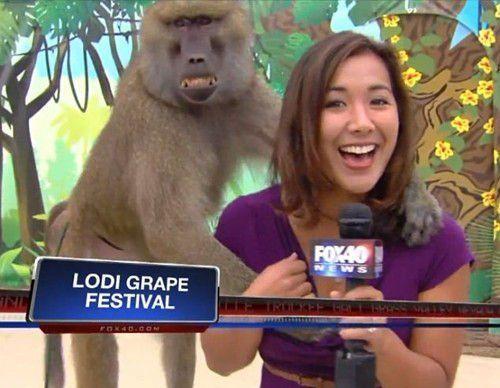 """当天在主持节目的罗德里格斯突然被名为米奇的狒狒""""袭胸"""",罗德里格斯表现镇定,甚至还开起玩笑。"""