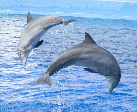 海豚(资料图)
