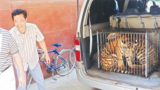 图为:武汉警方从越野轿车内截获的两只小老虎