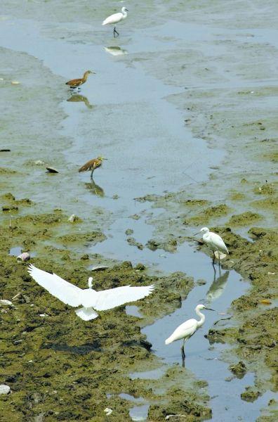 武汉投千万元保护湿地 庄稼被动物取食可获补偿