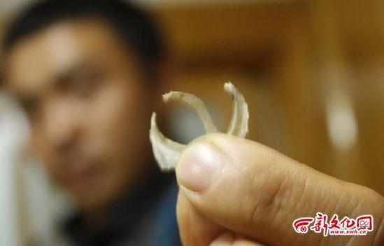 野生动物指甲图片