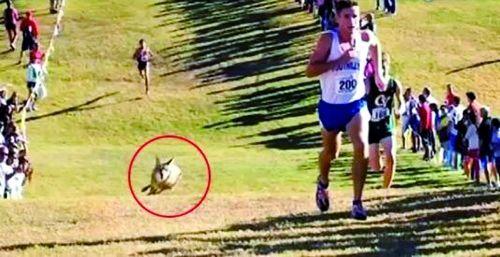 人类与动物赛跑已有上百万年的历史