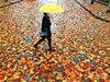 武汉公园尽显秋色