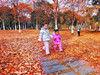 汉口江滩秋叶满地