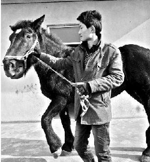 图为:马主人牵回受惊的马