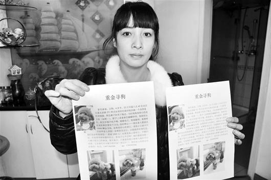 图为:熊女士悬赏万元寻爱狗 (记者周寿江摄)