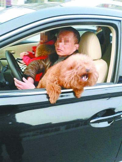 司机边开车边逗狗
