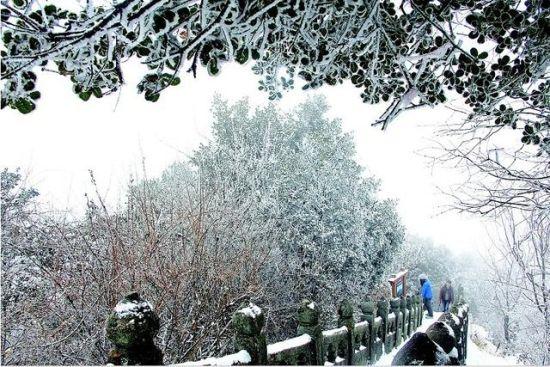 武当山景区现雾凇和冰挂景观恍如仙境