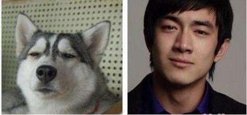 与动物撞脸的明星:林更新