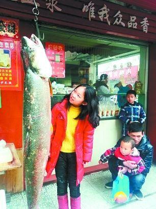 这条鳡鱼比11岁大的孩子高出一个头。 记者万勤 摄