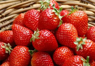 武汉周边草莓园大搜罗