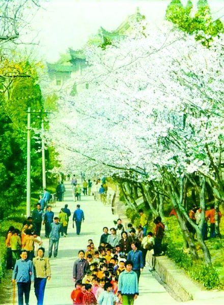图为:赏花也是一道美丽风景。(记者 陈迹 摄)