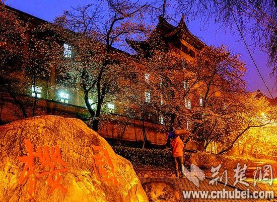 图为:夜色中的东湖樱园宁静浪漫。(记者 梅涛 摄)