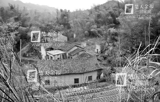 图为:竹林深处的村庄已经没有人居住