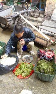 楚天时报讯 曹师傅在采阳园生活广场卖蕨菜