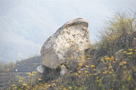 随县车云山惊现巨型蟾蜍石