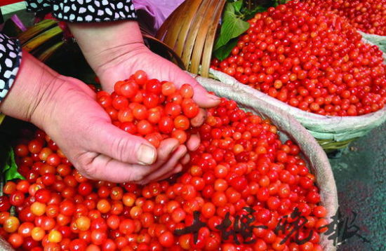 十堰樱桃晶莹剔透如玛瑙 大上市需等到下周