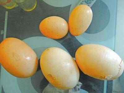 """母鸡产下的""""巨蛋""""与普通鸡蛋对比。"""