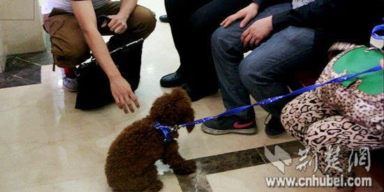 女护士带宠物狗在相亲现场