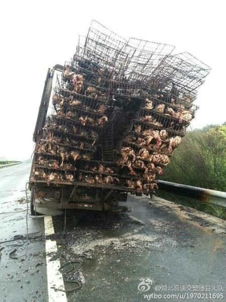"""高速路上轮胎起火,9100只倒霉肉鸡已加入""""肯德基""""豪华午餐"""