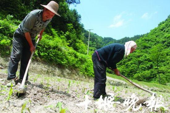 73岁的胡忠祥和72岁的老伴王举莲在庄稼地里边聊天边除草。