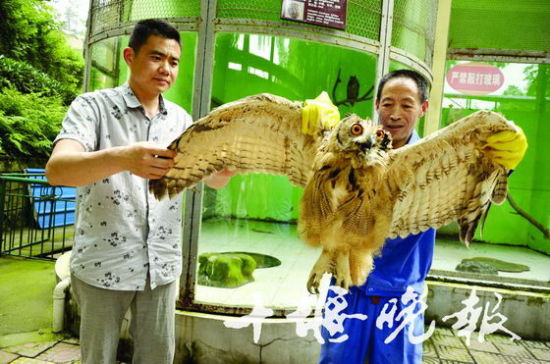 成都鹰猎_雕枭是几级保护动物 雕枭猎 枭_龙太子供应网