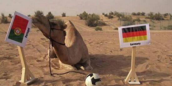 神驼看好葡萄牙击败德国