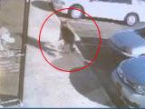 汽车遭枪击忠犬跳出挡子弹 一家人幸存