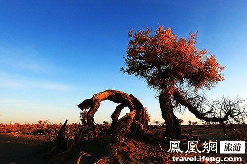 怪树林; 内蒙古额济纳胡杨林位于额济纳旗的中心位置――额济纳绿洲