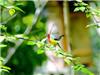 亚洲小鸟度蜜月