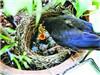 鸟夫妻筑爱巢