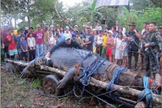 全球最大鳄鱼死亡