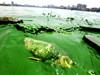 东湖爆发蓝藻