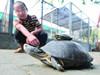 东湖捡巨龟比盆大