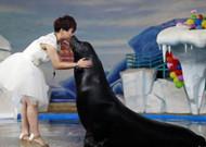 美女与海狮结婚