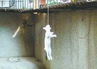 武汉小猫似上吊
